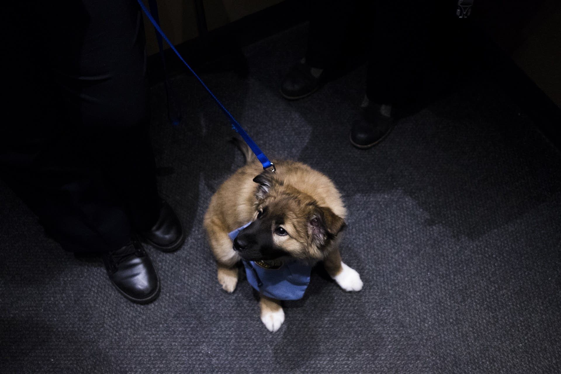 Sergeant Fuzz rides in the elevator.