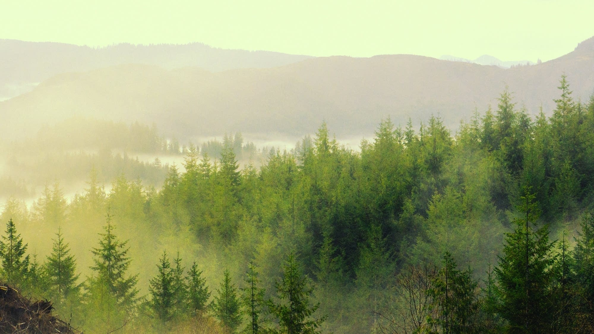 Mist hangs over a forest in Oregon.