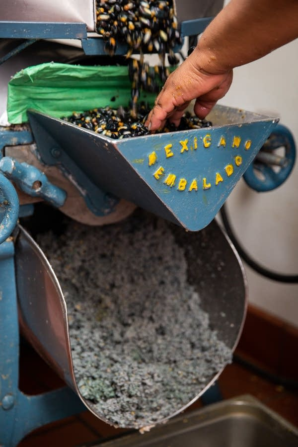 Blue corn is poured into a grinder.