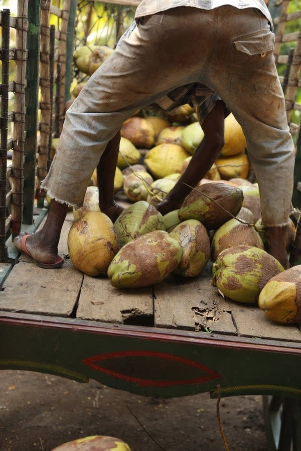 coconut delivery wagon