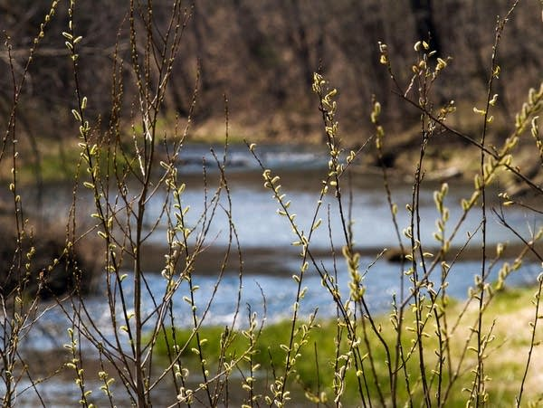 Spring comes to the Whitewater River