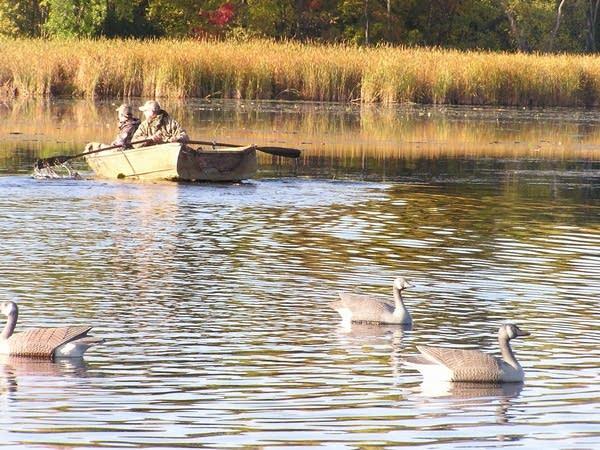b91faa13eaa DNR expects good duck hunting when season opens Saturday | MPR News