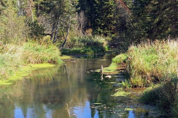 Wild Rice River winds through forest and prairie.