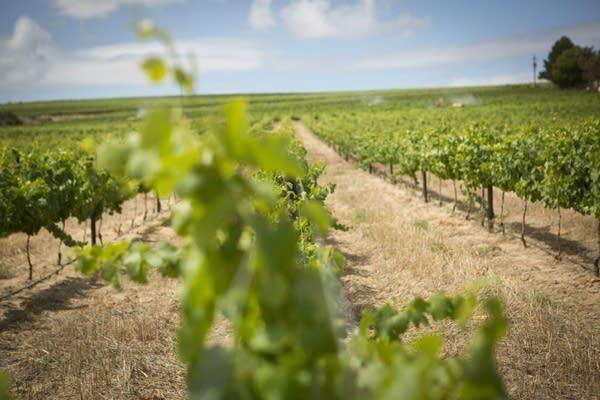 Reyneke Organic Wines