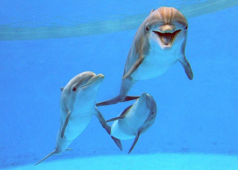 Mn Zoo S Dolphins Find New Homes Minnesota Public Radio News