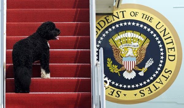 President Obama's pet Bo