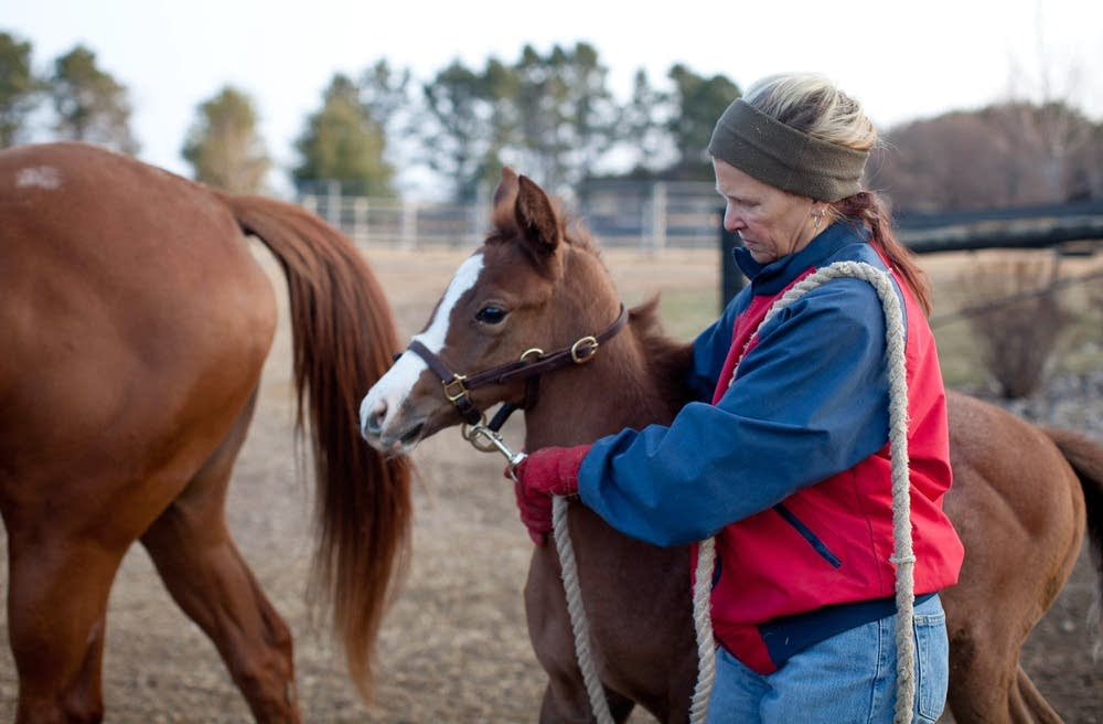 Minnesota horse breeders