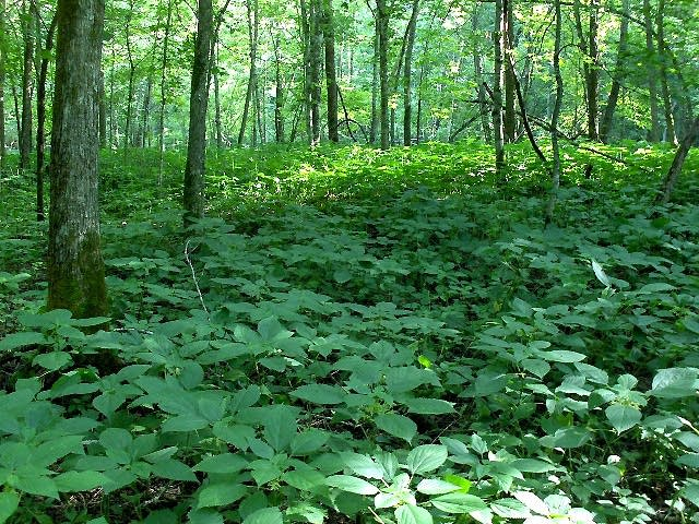 Whitewater State Park flora