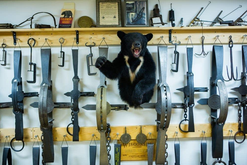 A mounted bear