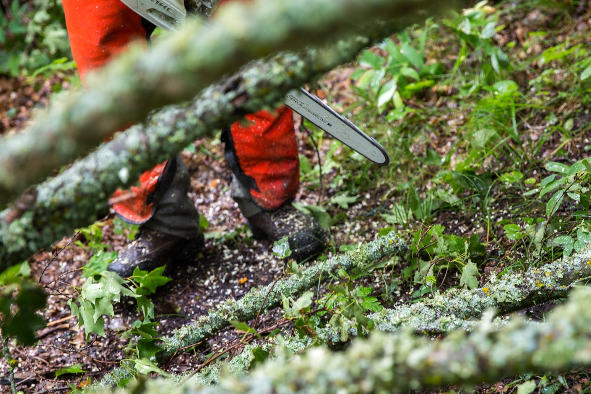 Chainsaws are used to clear the trail