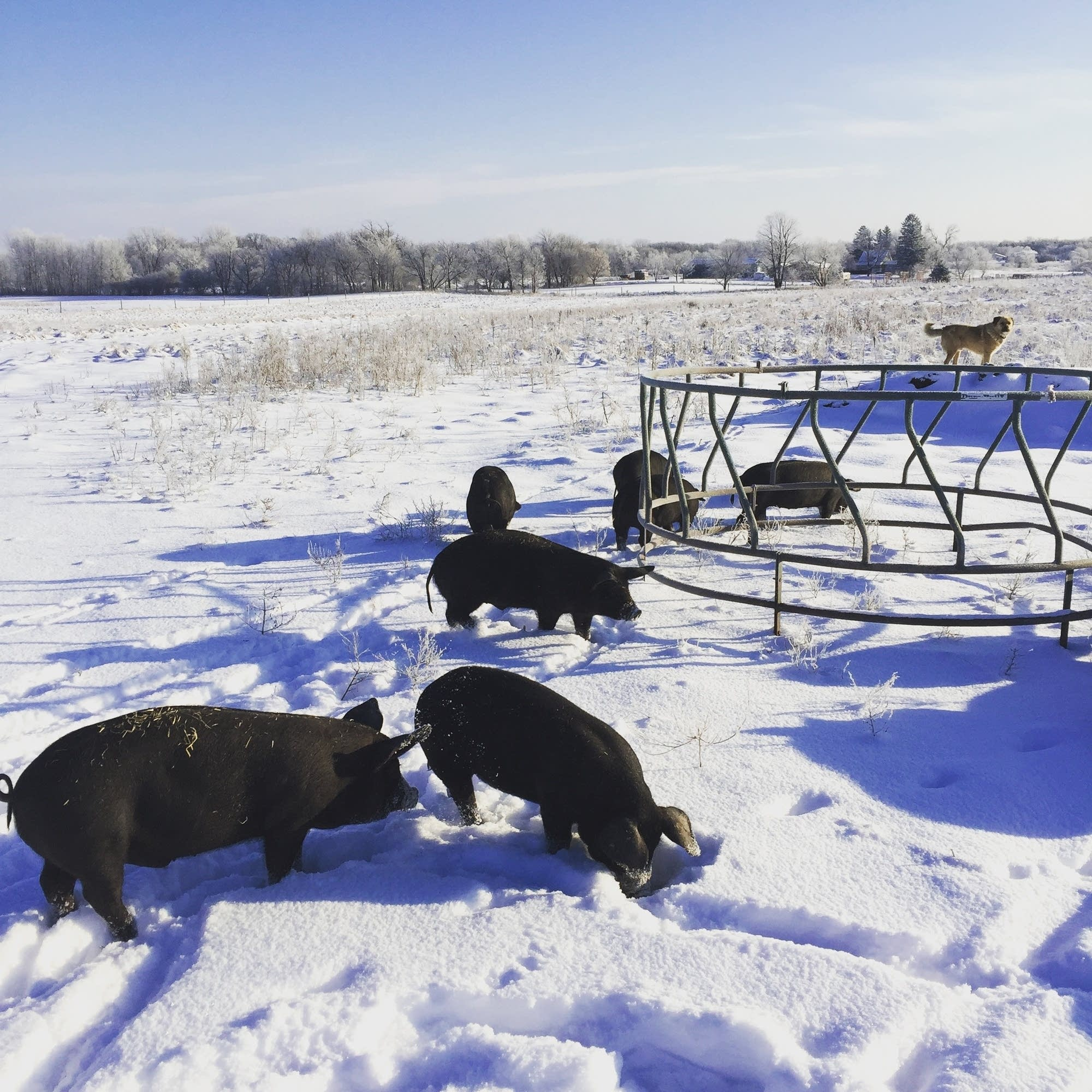 Outside on McCann's farm in winter.