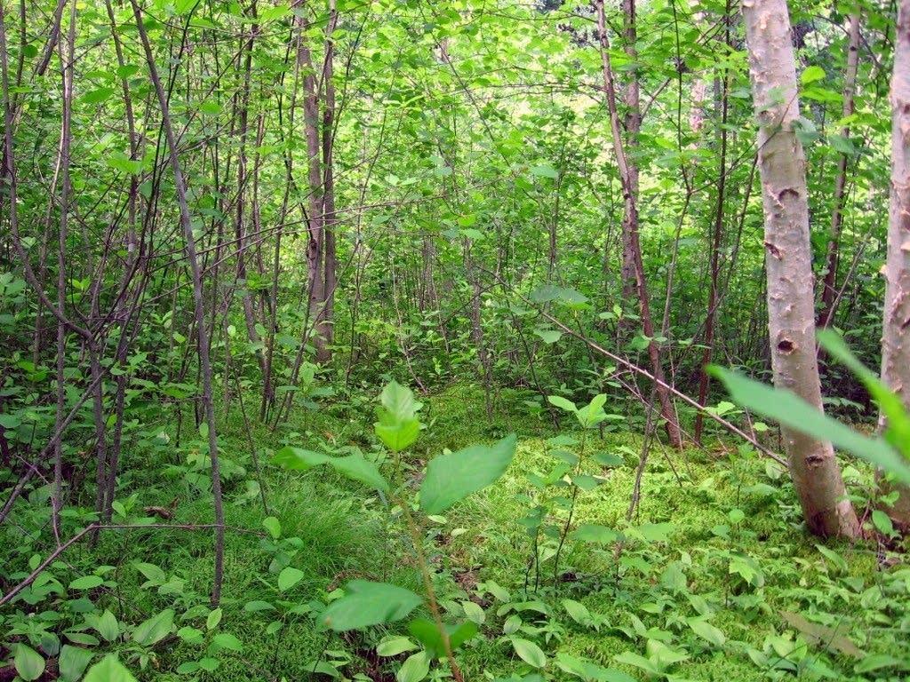 Quaking Bog in Theodore Wirth Park
