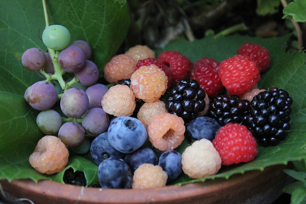 A garden harvest medley of summer fruits