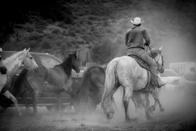 Bc8221 20140715 corralling broncos at the snowmass rodeo