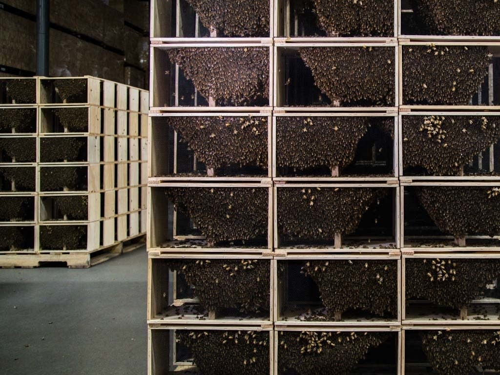 Bees are shipped from California to be picked up by hobby beekeepers.