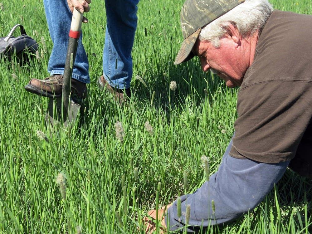 Doug Toussaint examined the soil surface.