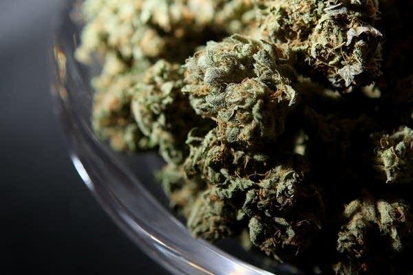 A bowl of medicinal marijuana