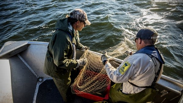 DNR employees Kris Nissen, right, and Greg Berg haul in a net.