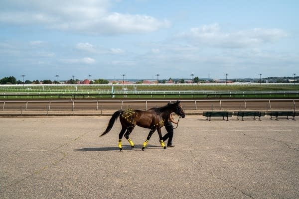 Chandler Brown walks a horse while its paint dries.