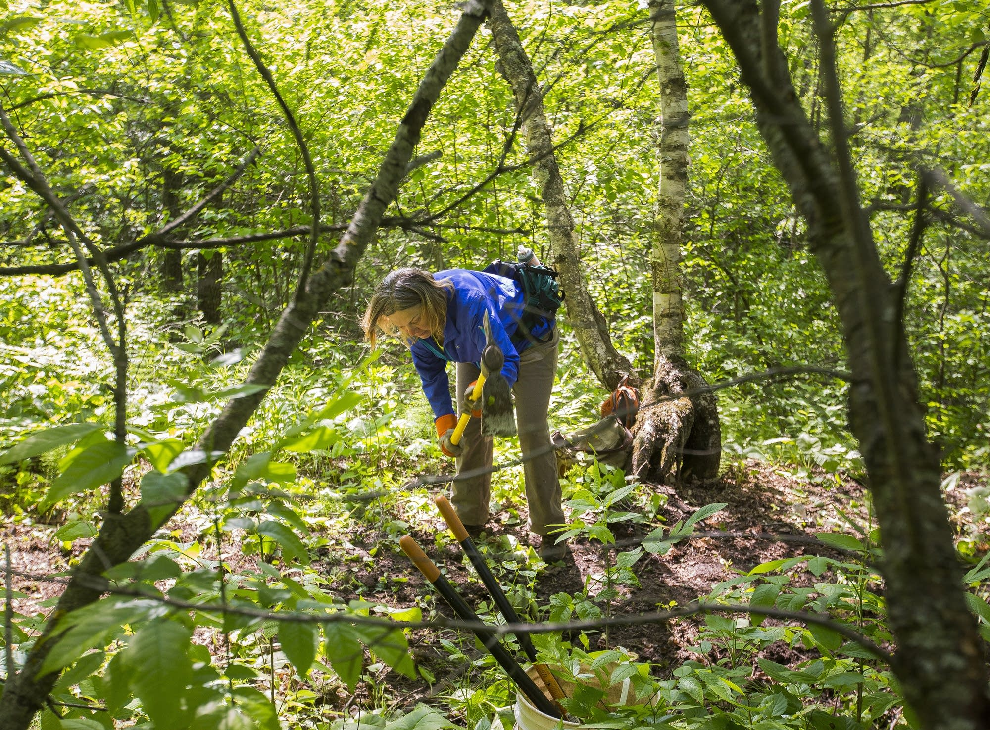 Carol Fries goes to work on a new section.