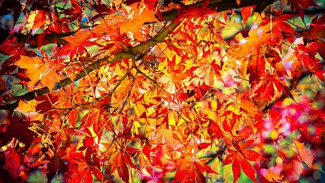 Autumn Bloom