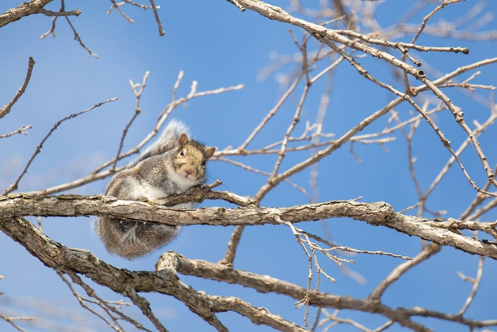 A squirrel catches some sun