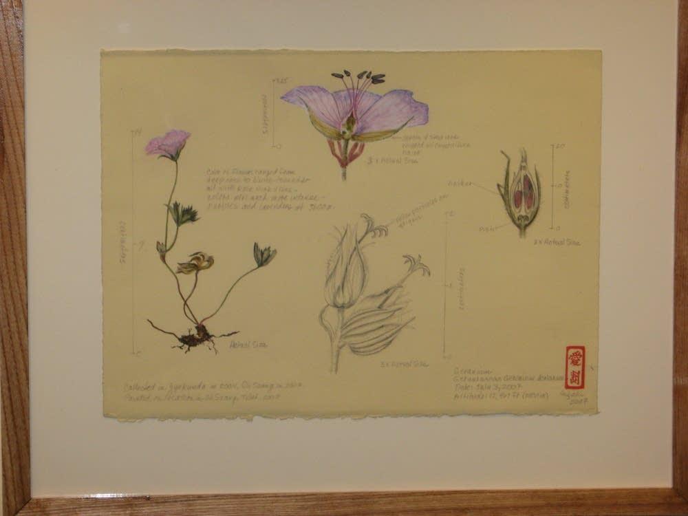 New style of botanical