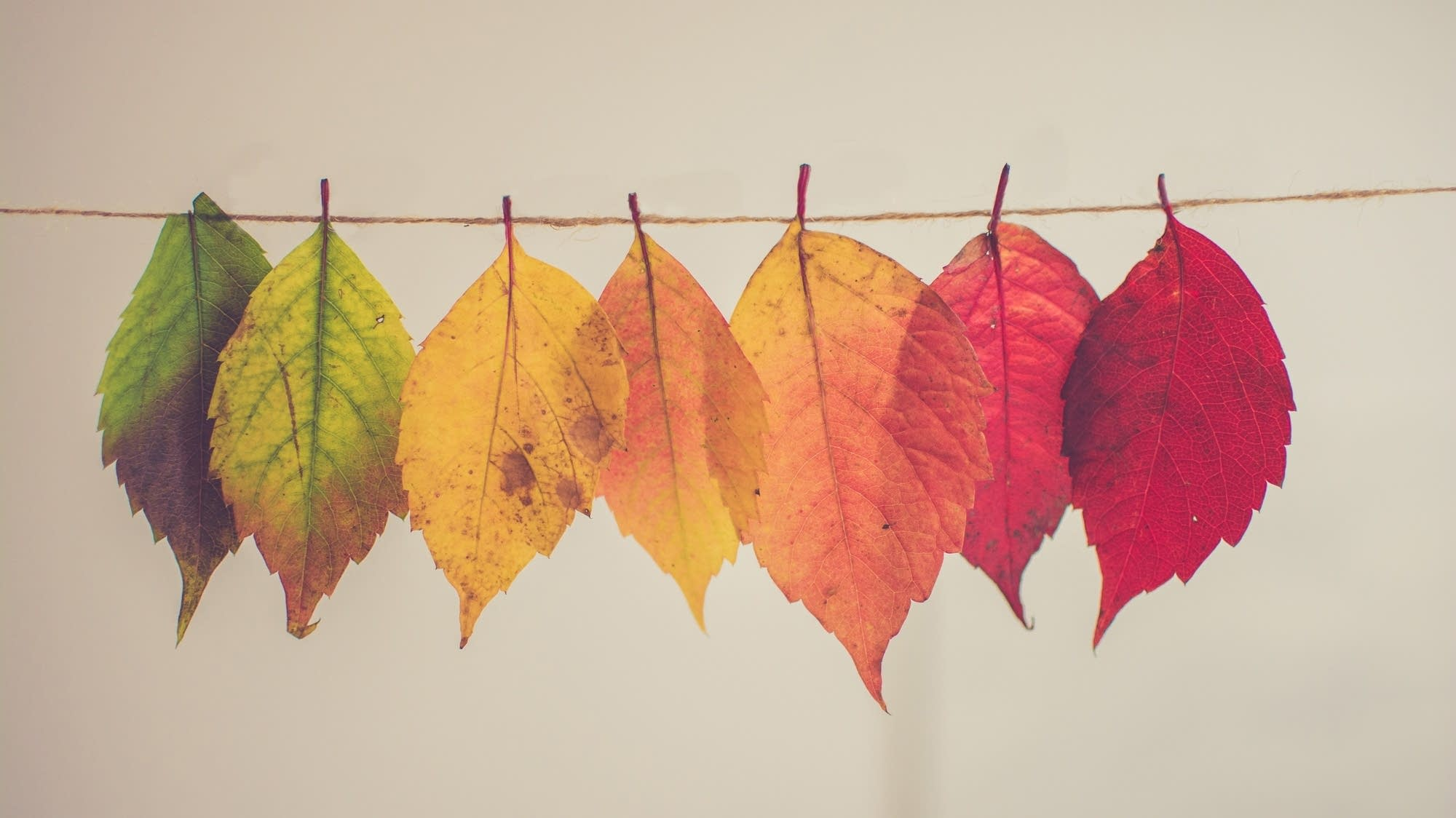 A spectrum of leaves hangs from a string.