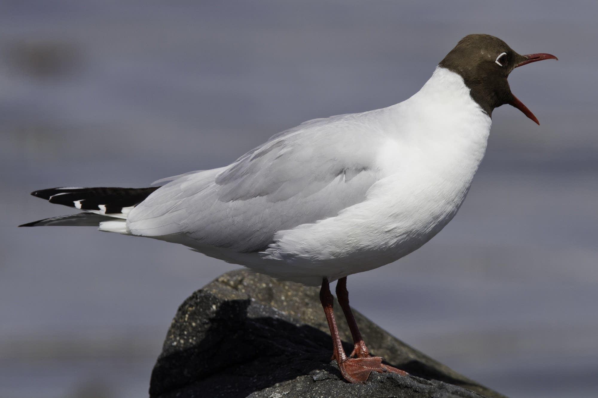 Oslo - 28 - bird with open beak