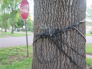 Here, a tree is used to support cables.