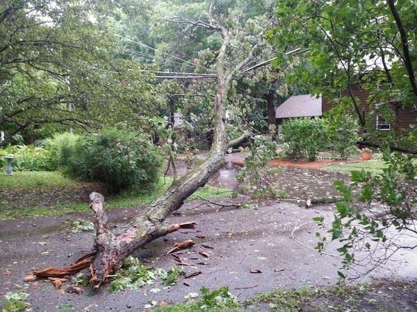 529 tree on pl