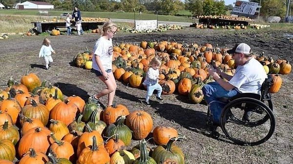 Bill Heilman takes pictures of his family while picking pumpkins