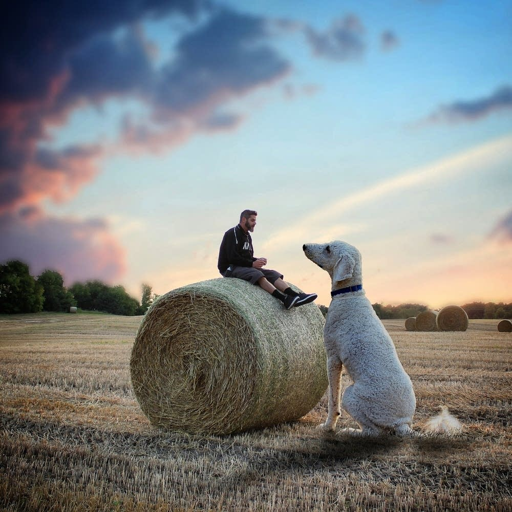 The Adventures Of A Man And His Foot Dog Minnesota Public - Guy uses photoshop to turn his miniature dog into a giant