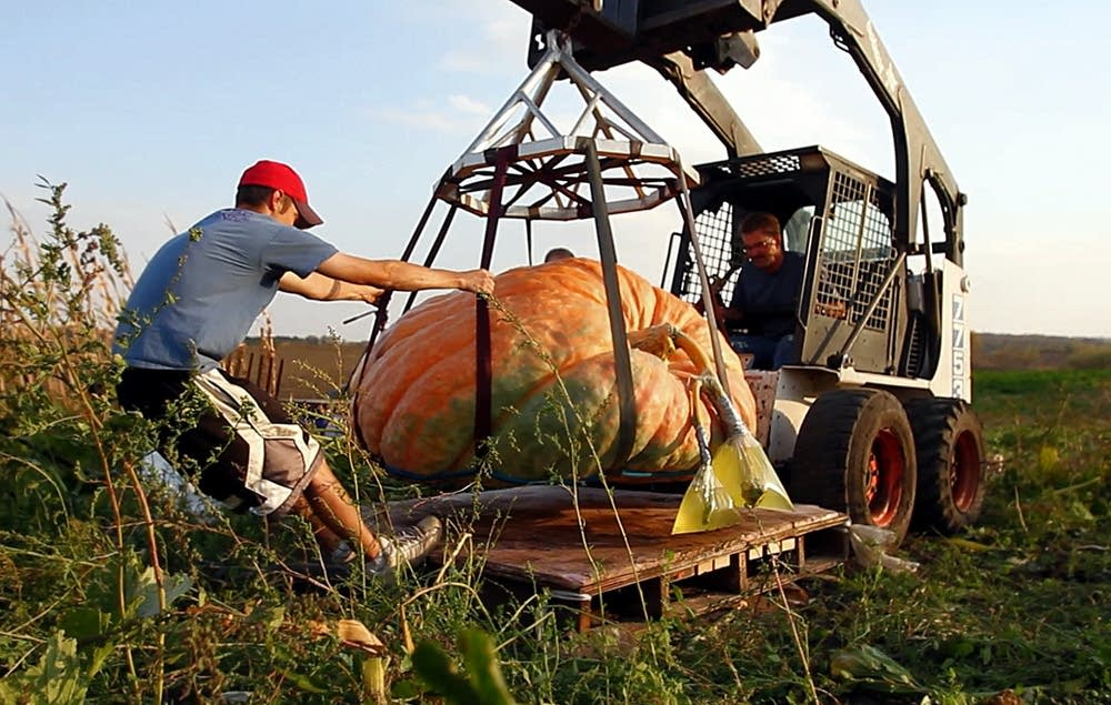 Moving a giant pumpkin