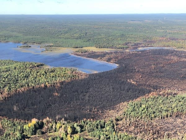 A section of forest burned by the Greenwood Fire