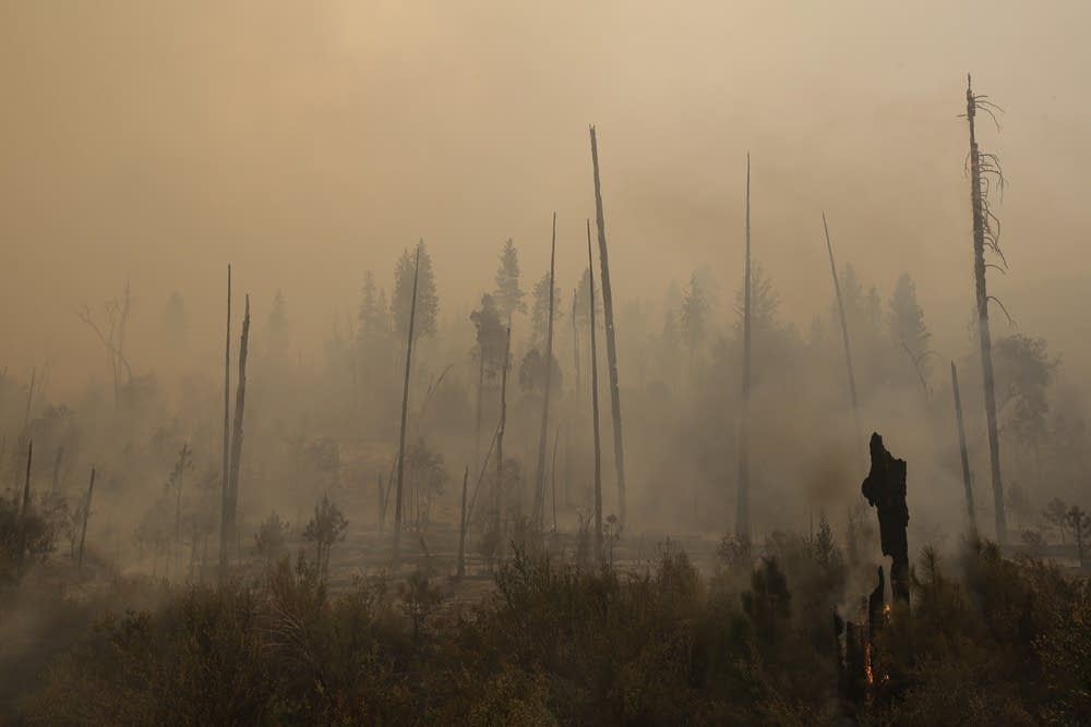 Smoke rises from smoldering trees