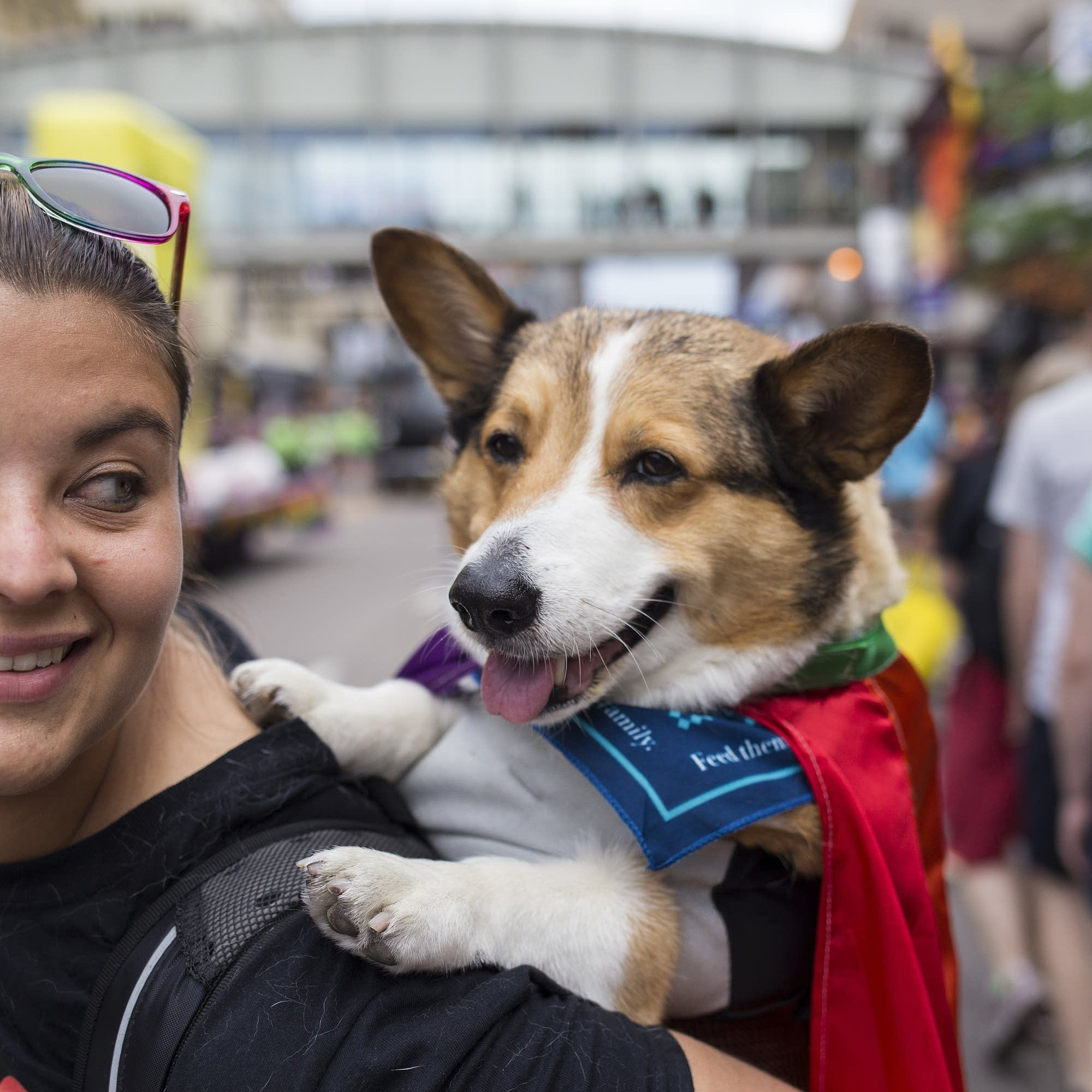 Martin the Corgi sports a Rainbow Flag cape.