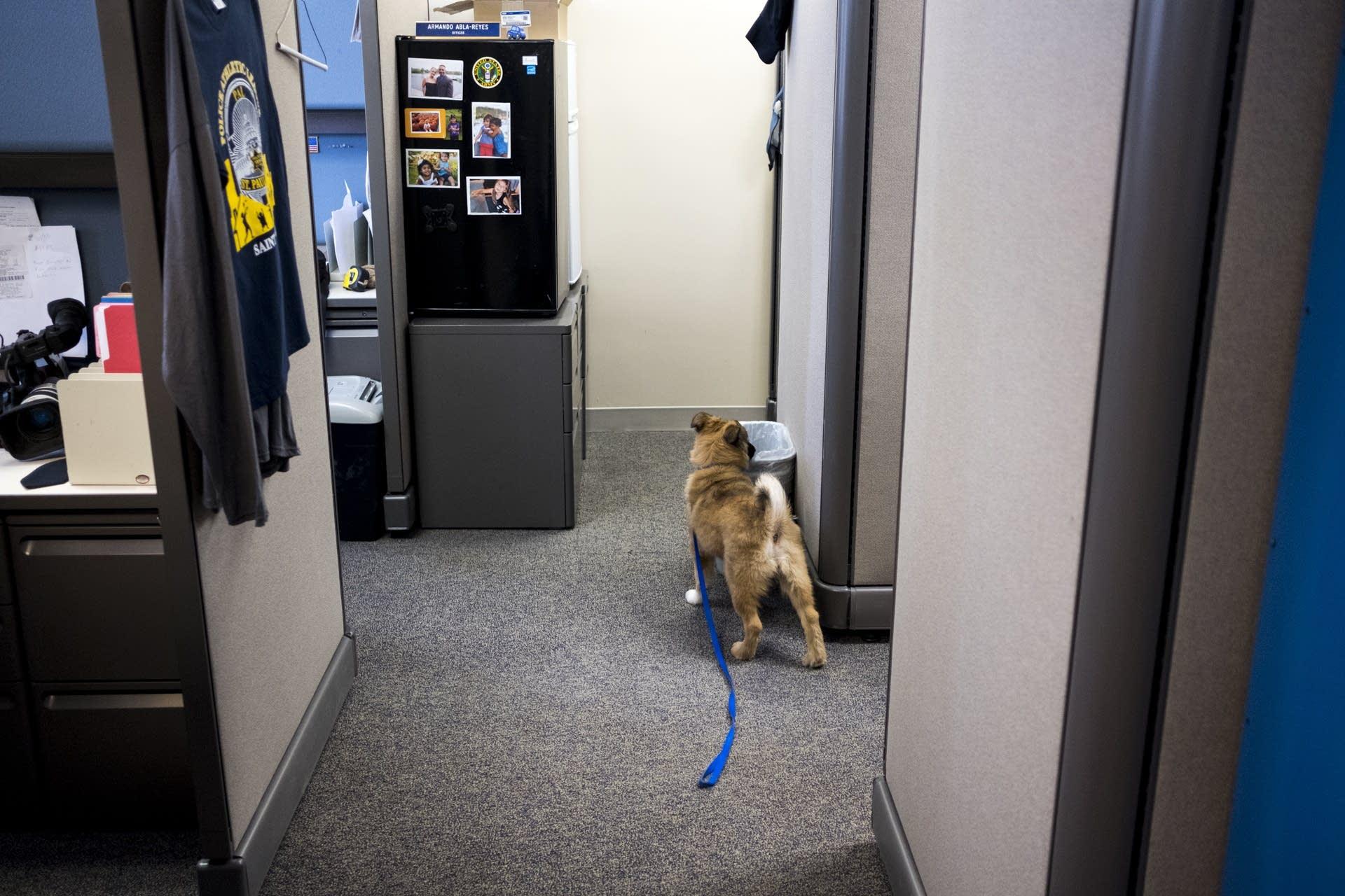 Sergeant Fuzz investigates a suspicious trash can.