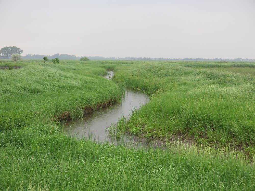 Restored creek