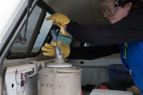 Nicole Benson stores the pellet sample on dry ice.