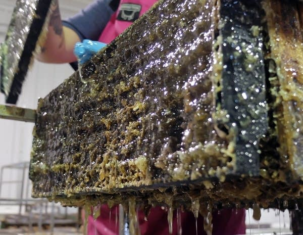 Honey drips from a comb at Brownings Honey Company.