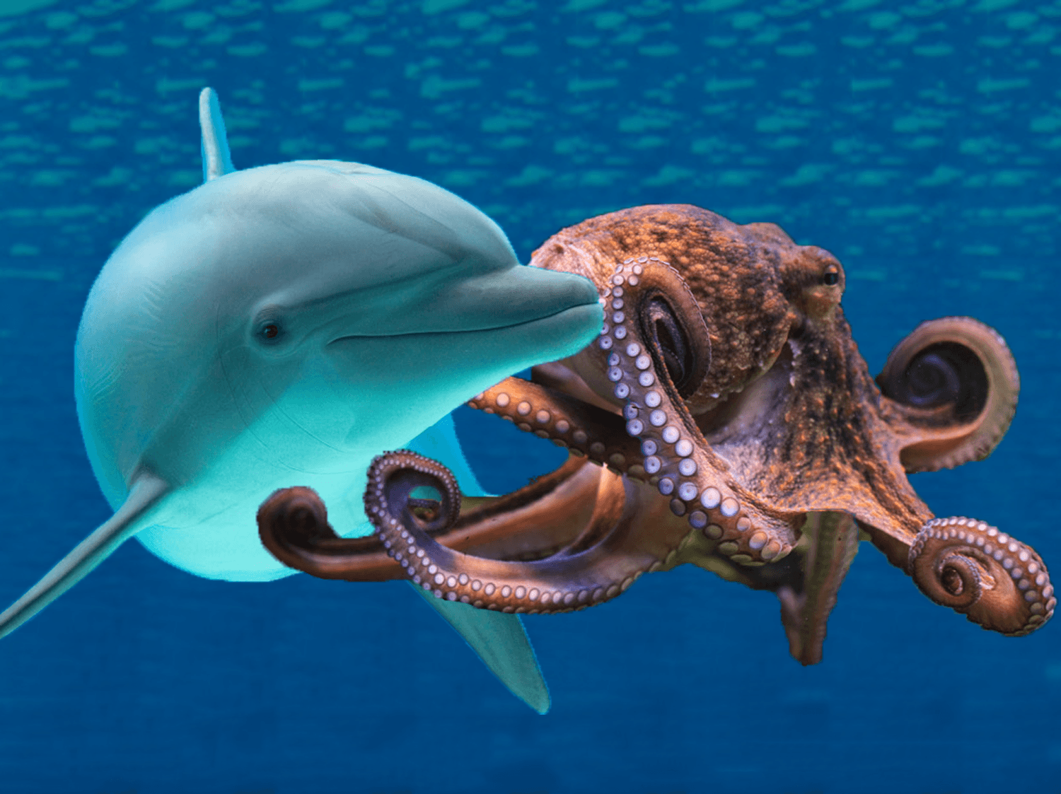 Which are cooler? Dolphins or octopuses