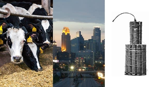 Dairy cows, a dynamite cartridge and the skyline of Minneapolis.