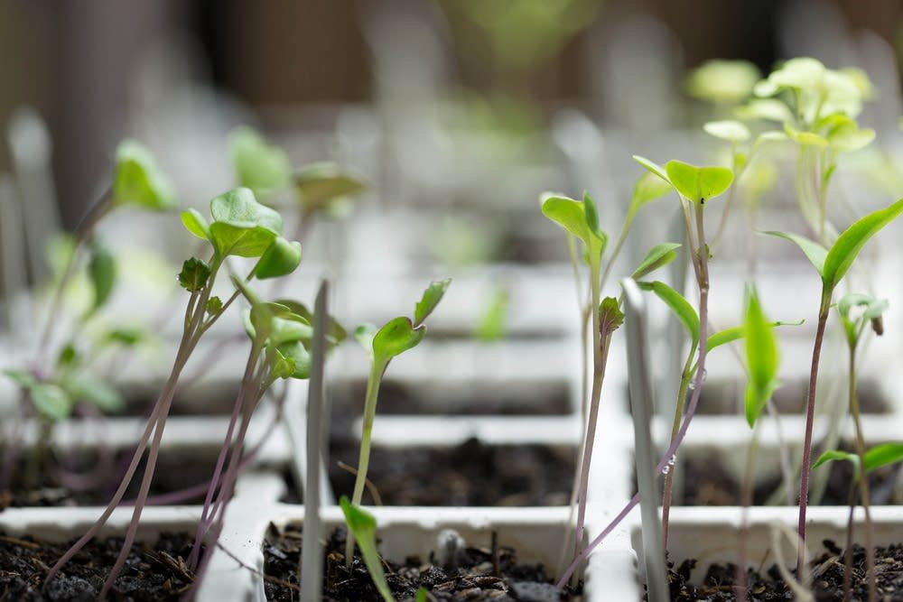 Your spring gardening questions answered minnesota for Gardening questionnaire
