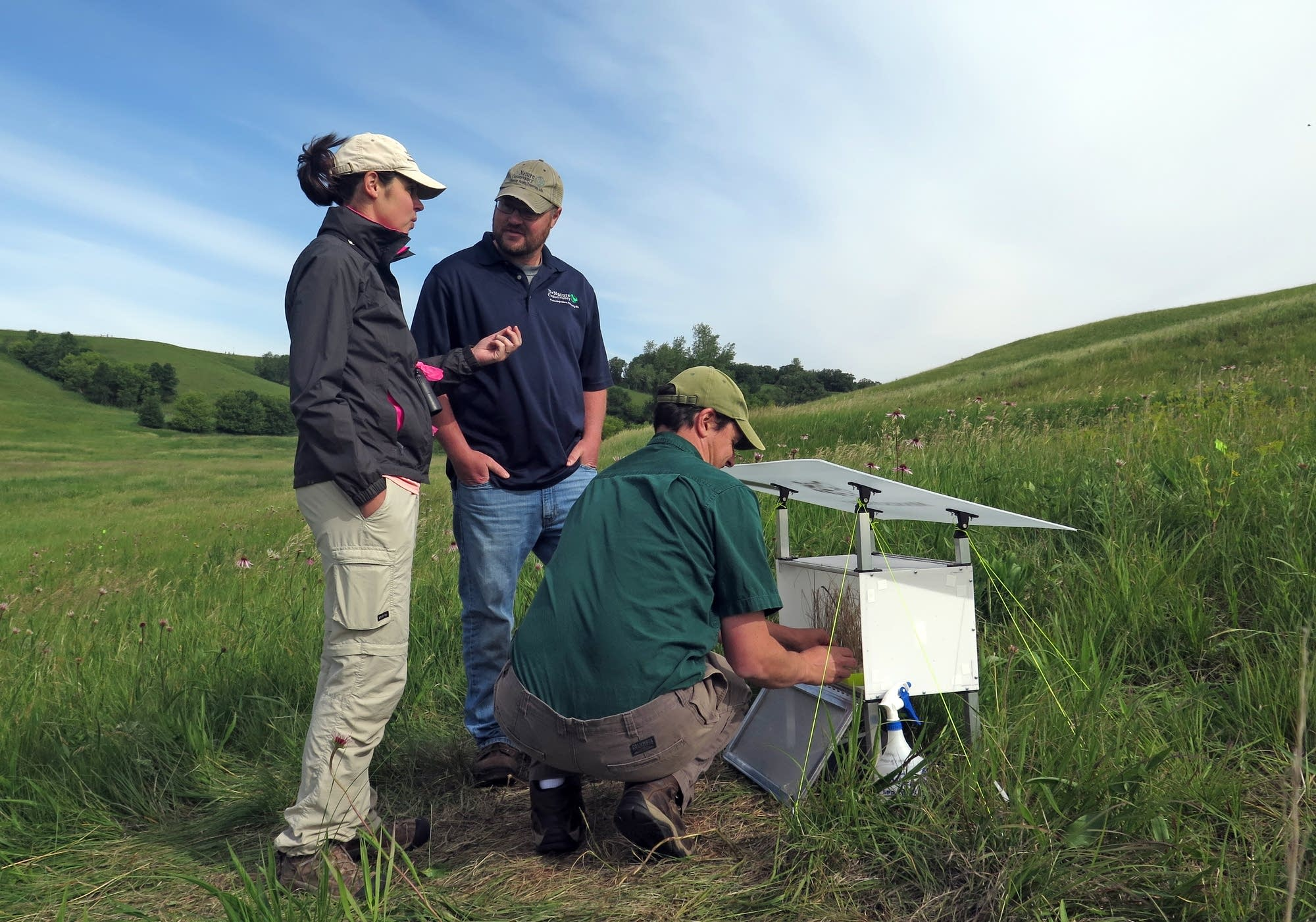 Preparing to release butterflies at Hole-In-The-Mountain Prairie.