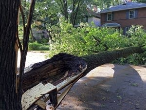A tree in St. Paul brought down a street light.