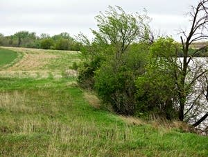 A better-than-required buffer in Otter Tail County