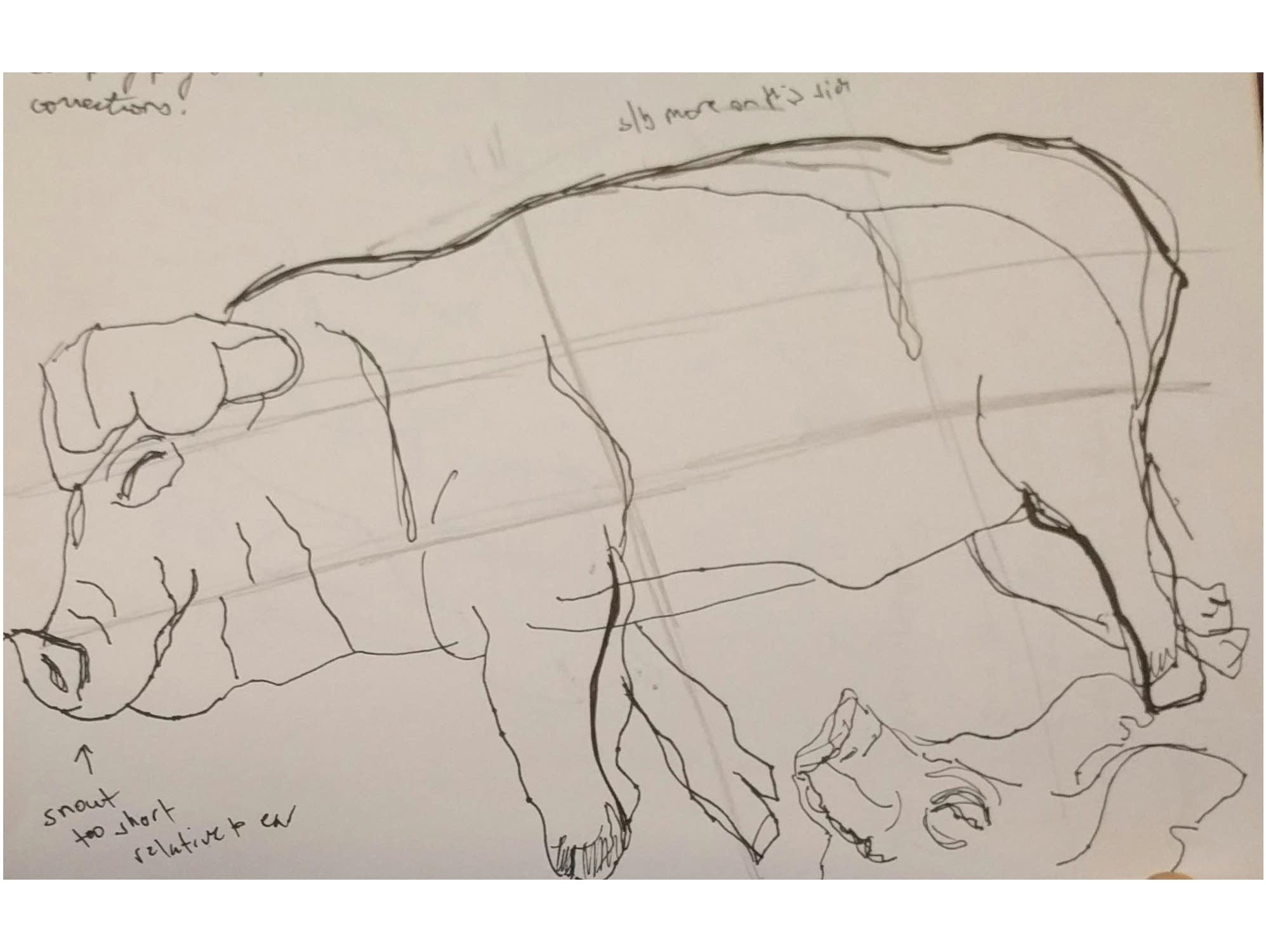 A sketch of a sleeping pig, complete with artist's critique