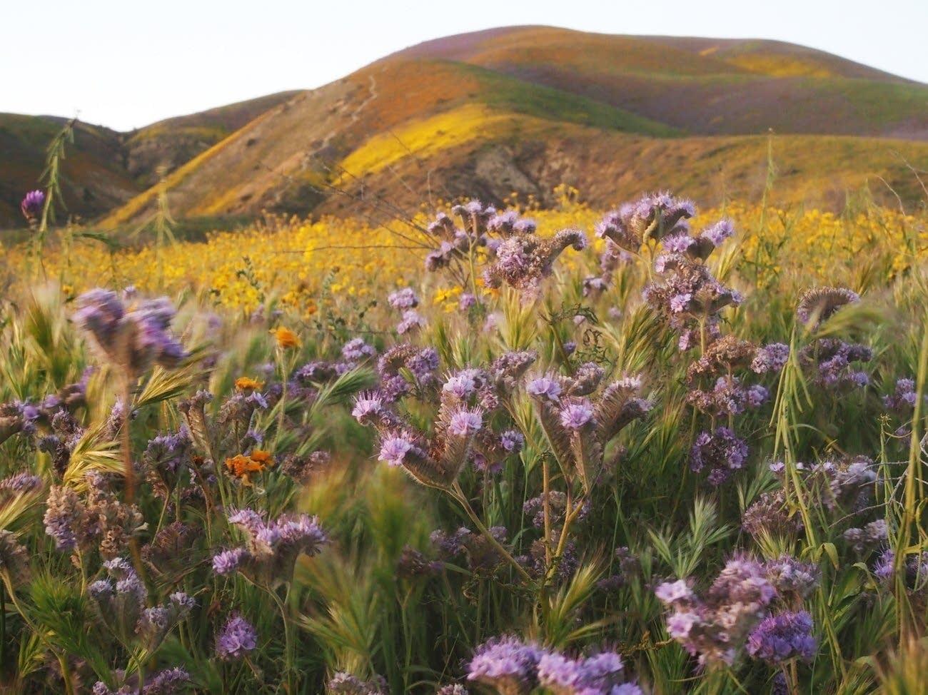 Tremblor Range in Carrizo Plain National Monument