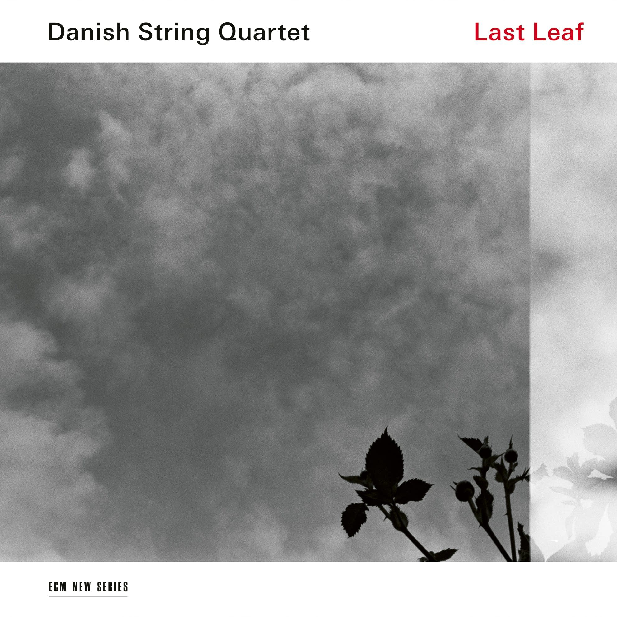 The Danish String Quartet: Last Leaf